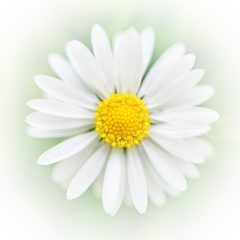 daisy alpert florin